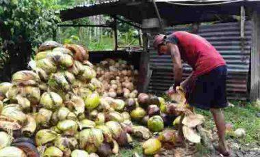 Ini Harga Cengkih, Kopra dan Vanili di Sulut