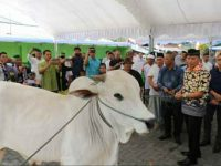 Walikota Tomohon Serahkan Hewan Qurban di Idul Adha