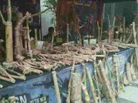 Hem, Ada Pameran Bambu di Disbud Sulut, Menarikkah?